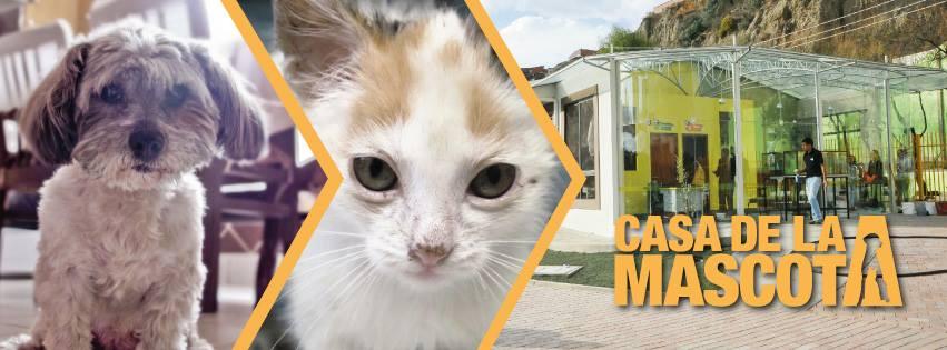 Atenciones gratuitas de la casa de la mascota concluyen este viernes urgentebo - La casa de la mascota ...