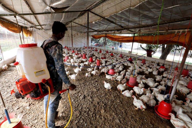 El primer caso mundial de gripe aviar H10N3 en humanos fue detectado en China   Urgentebo